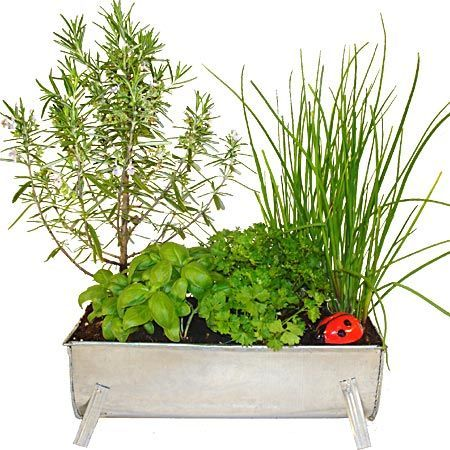 et si on cultivait nos plantes aromatiques. Black Bedroom Furniture Sets. Home Design Ideas